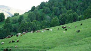 Most Profitable Animal Farming