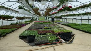 The Pros and Cons of Greenhouses